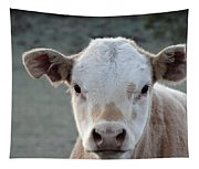 Baby Cow In Colorado Tapestry