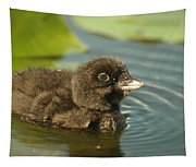 Baby Loon Tapestry