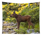 Baby Moose Baxter State Park Tapestry
