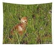 Baby Sandhill Crane Chick Tapestry