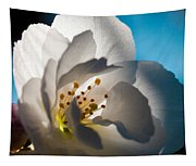 Backlit Cherry Blossom Tapestry