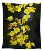 Backlit Leaves Of Autumn Tapestry