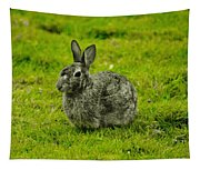 Backyard Bunny In Black White And Green Tapestry