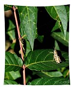 Backyard Hopper Tapestry