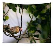 Bad Hair Day-female Northern Cardinal Tapestry