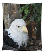 Bald Eagle #3 Tapestry