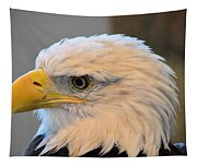 Bald Eagle 7615 Tapestry