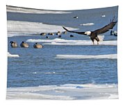 Bald Eagle Over Maumee River 2456 Tapestry