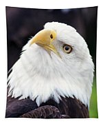Bald Eagle - Power And Poise 03 Tapestry