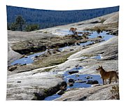 Bald Rock Lookout Tapestry