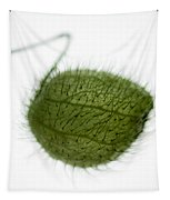 Balloon Plant Tapestry