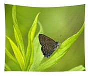Banded Hairstreak Butterfly Resting On Green Leaf Tapestry