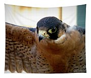 Barbary Falcon Wings Stretched Tapestry