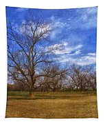 Bare Pecan Trees Tapestry