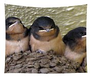 Barn Swallows 1 Tapestry