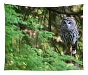 Barred Owl In Forest Tapestry