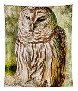Barred Owl On Moss Tapestry