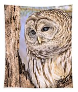 Barred Owl Watch Tapestry