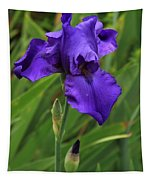 Beautiful Purple Iris Flower Art Tapestry