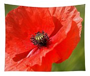 Beautiful Poppies 6 Tapestry