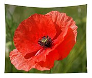 Beautiful Poppies 7 Tapestry