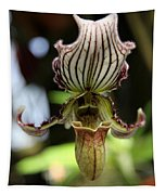 Beautiful Striped Lady Slipper Tapestry