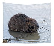 Beaver Chewing On Twig Tapestry