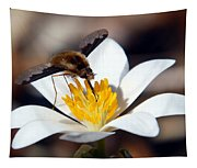 Bee Fly And Bloodroot Tapestry