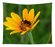 Bee On A Smooth Oxeye Tapestry