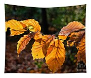Beech Leaves In Winter Tapestry