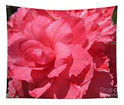 Begonia Named Non-stop Pink Tapestry