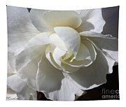 Begonia Named Nonstop Apple Blossom Tapestry