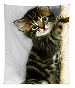 Benny The Kitten Playing Tapestry