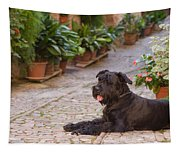 Big Black Schnauzer Dog In Italy Tapestry