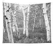 Birch Trees In A Forest, Acadia Tapestry