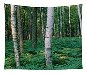 Birch Trees In A Forest Tapestry