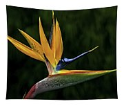 Bird Of Paradise Tapestry