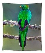 Bird Perching On A Branch, Savegre Tapestry