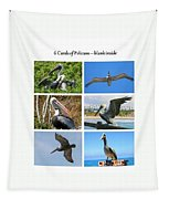 Birds - Pelicans - Boxed Cards Tapestry
