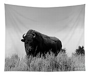 Bison Cow On An Overlook In Yellowstone National Park Black And White Tapestry