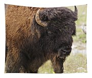 Bison From Yellowstone Tapestry