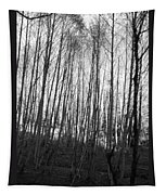 Black And White Birch Stand Tapestry