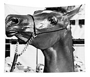 Black And White Horse Head Tapestry