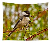 Black Capped Chickadee Tapestry