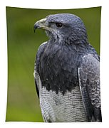 Black-chested Buzzard-eagle Tapestry