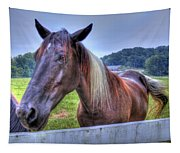 Black Horse At A Fence Tapestry