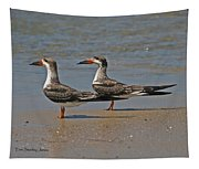 Black Skimmers On The Beach Tapestry