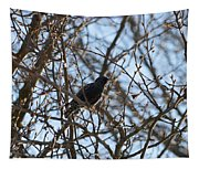 Black  Starling Tapestry
