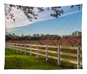 Blooming Peach Tree's At Boone Hall Tapestry