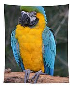 Blue And Gold Macaw Tapestry